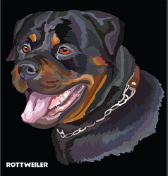 rottweiler colorful portrait vector image vector image