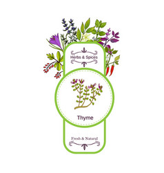 vintage herbs and spices label collection thyme vector image