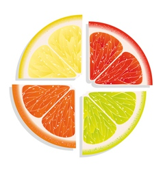 citrus vector image vector image