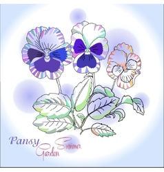Pansy on blue background vector