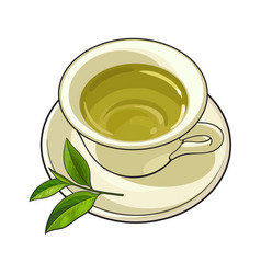 China porcelain cup saucer fresh green tea leaf vector