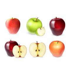set of apple with slices vector image