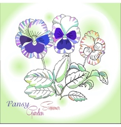 Pansy on green background vector