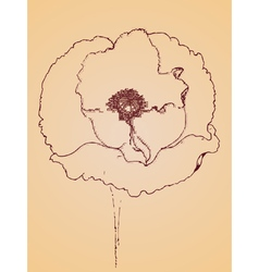 Poppy flowers sketch3 vector