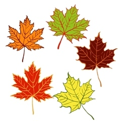 cartoon autumn leaf set vector image