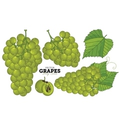 Grape set vector