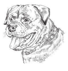 rottweiler hand drawing portrait vector image vector image