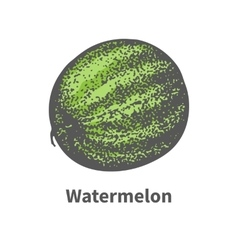 Single ripe juicy green watermelon vector