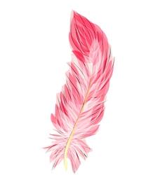 Flamingo feather vector