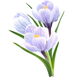 Flowers crocuses vector