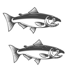 salmon fish icons isolated on white background vector image vector image