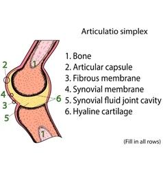 Simplex joint anatomical atlas vector