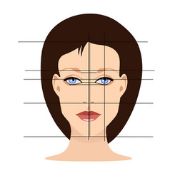 face with lines showing facial proportions vector image vector image
