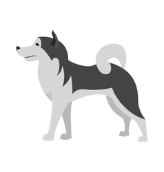 Alaskan malamute dog breed flat vector