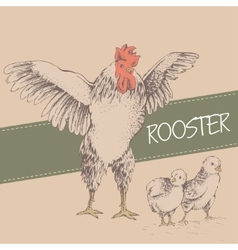 front rooster and chick vector image