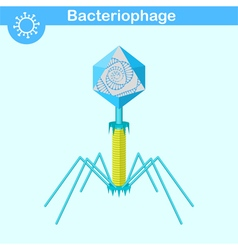 Bacteriophage - bacterial dna virus vector