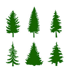 set of green silhouettes of pine trees on white vector image