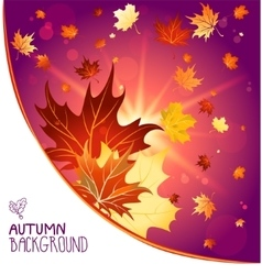 Autumn decoration with maple leaves vector image