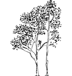 Birch Tree Silhouette vector image