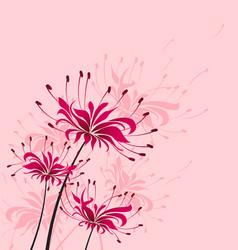 flower higanbana vector image