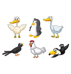 Different kinds of birds vector