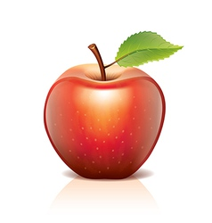 Object red apple vector
