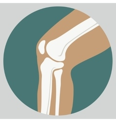Human knee joint vector image vector image