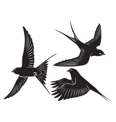bird swallow vector image vector image