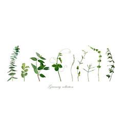 Branch twig set eucalyptus boxwood thyme vector
