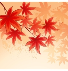 Autumn leaves background of sky vector