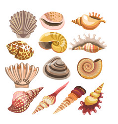 Shells or seashells isolated icons vector