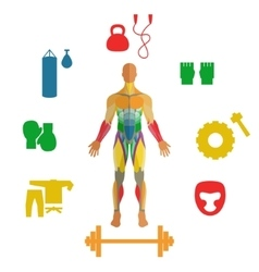 Human muscles with icons of sport equipment vector