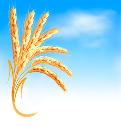 Ears of wheat in front of blue sky vector image