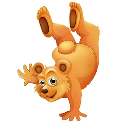 A playful brown bear vector image vector image