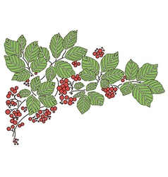 Background with leaves and with red berries vector