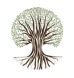 Big oak tree vector