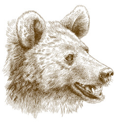 engraving of bear head vector image vector image