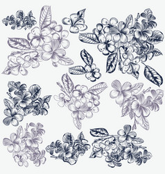 set of hand drawn flowers for invitation designs vector image vector image