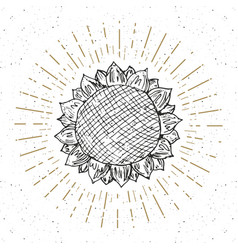 Sunflower sketch vintage label hand drawn grunge vector