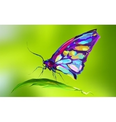 The cute colored butterfly on the grass vector