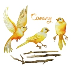 Watercolor canary set vector