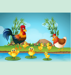 rooster and chicks by the river vector image
