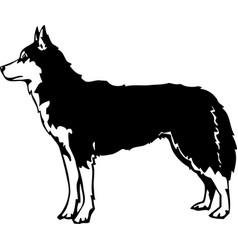 Acg00063 siberian husky01 vector