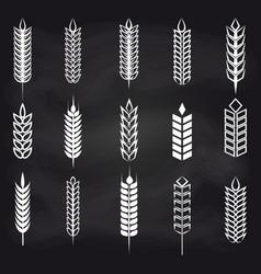 Wheat ears on chalkboard vector