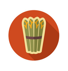 asparagus flat icon vegetable vector image vector image