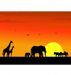 safari africa vector image vector image