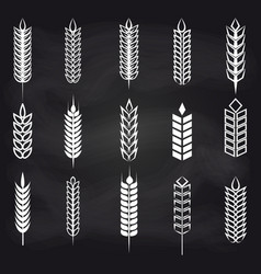 wheat ears on chalkboard vector image vector image