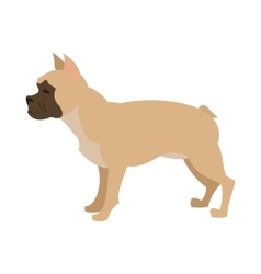 French bulldog design flat vector
