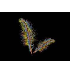 Coloured feather vector