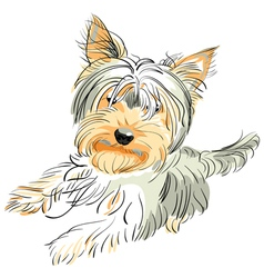 Yorkshire terrier vector